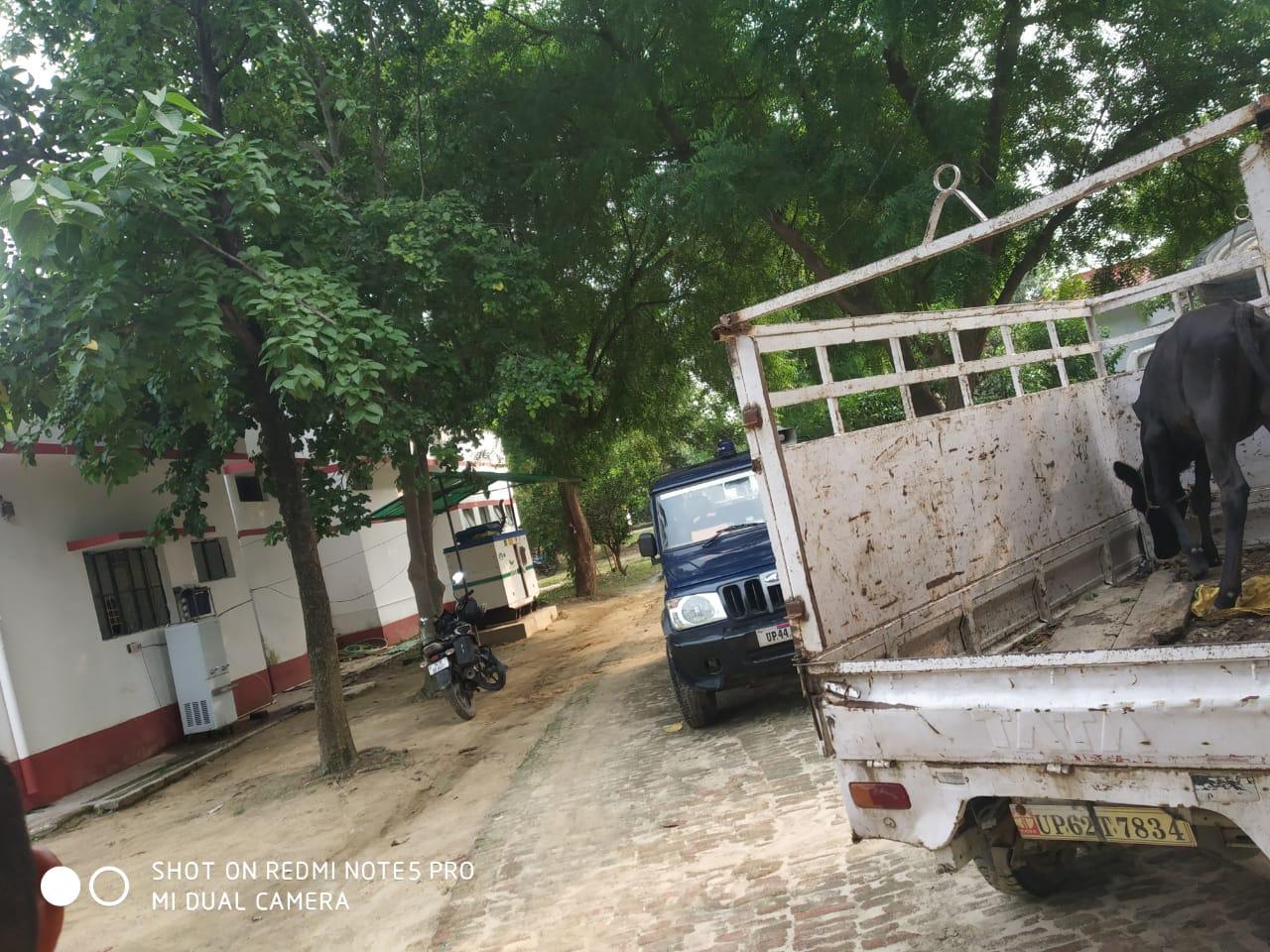 हिंदी समाचार |दबंग द्वारा महिला की पिटाई,...