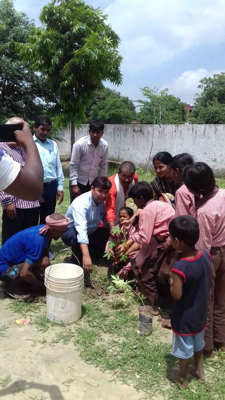 हिंदी समाचार |पौधरोपण महाकुम्भ में लगे...