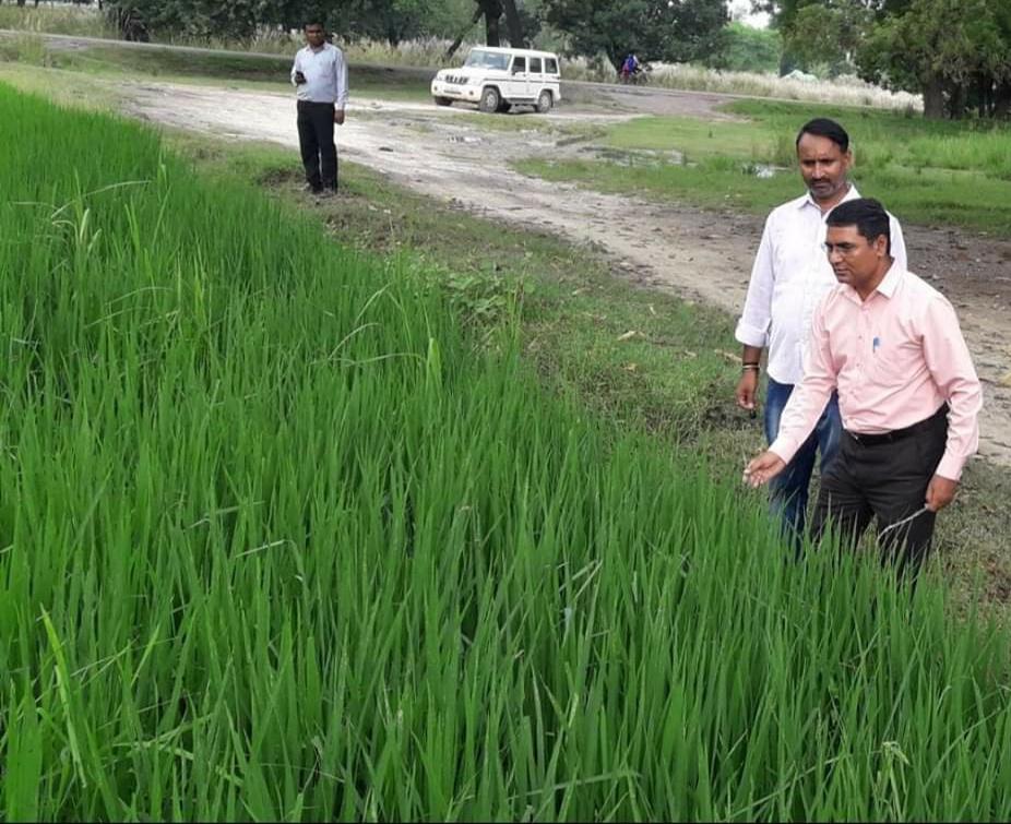 हिंदी समाचार |खरीफ फसलों को रोगमुक्त रखने...