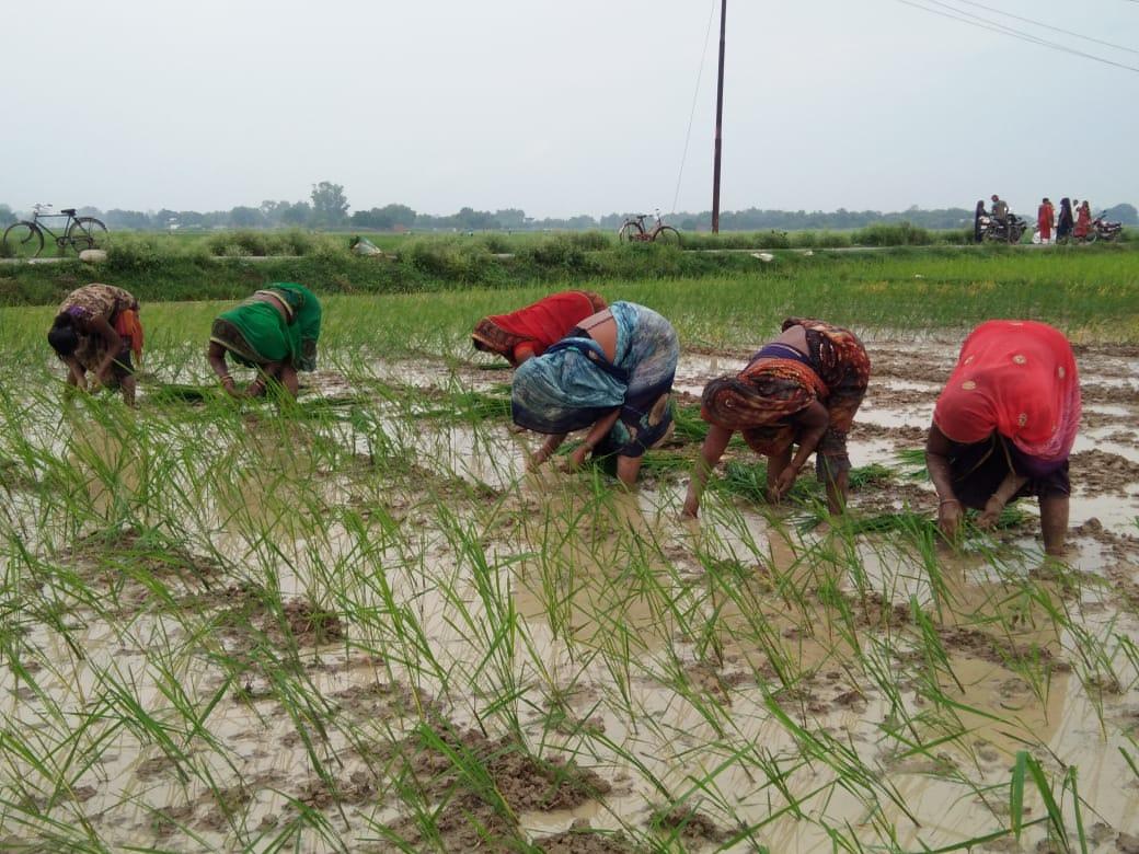 हिंदी समाचार | ग्रामीण क्षेत्रों में हुआ...