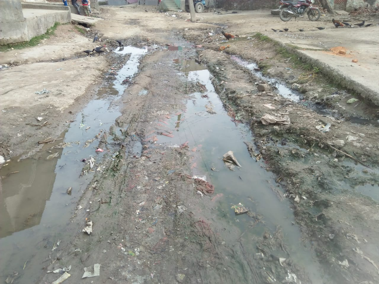 हिंदी समाचार |गड्ढा युक्त सड़क को गड्ढा...