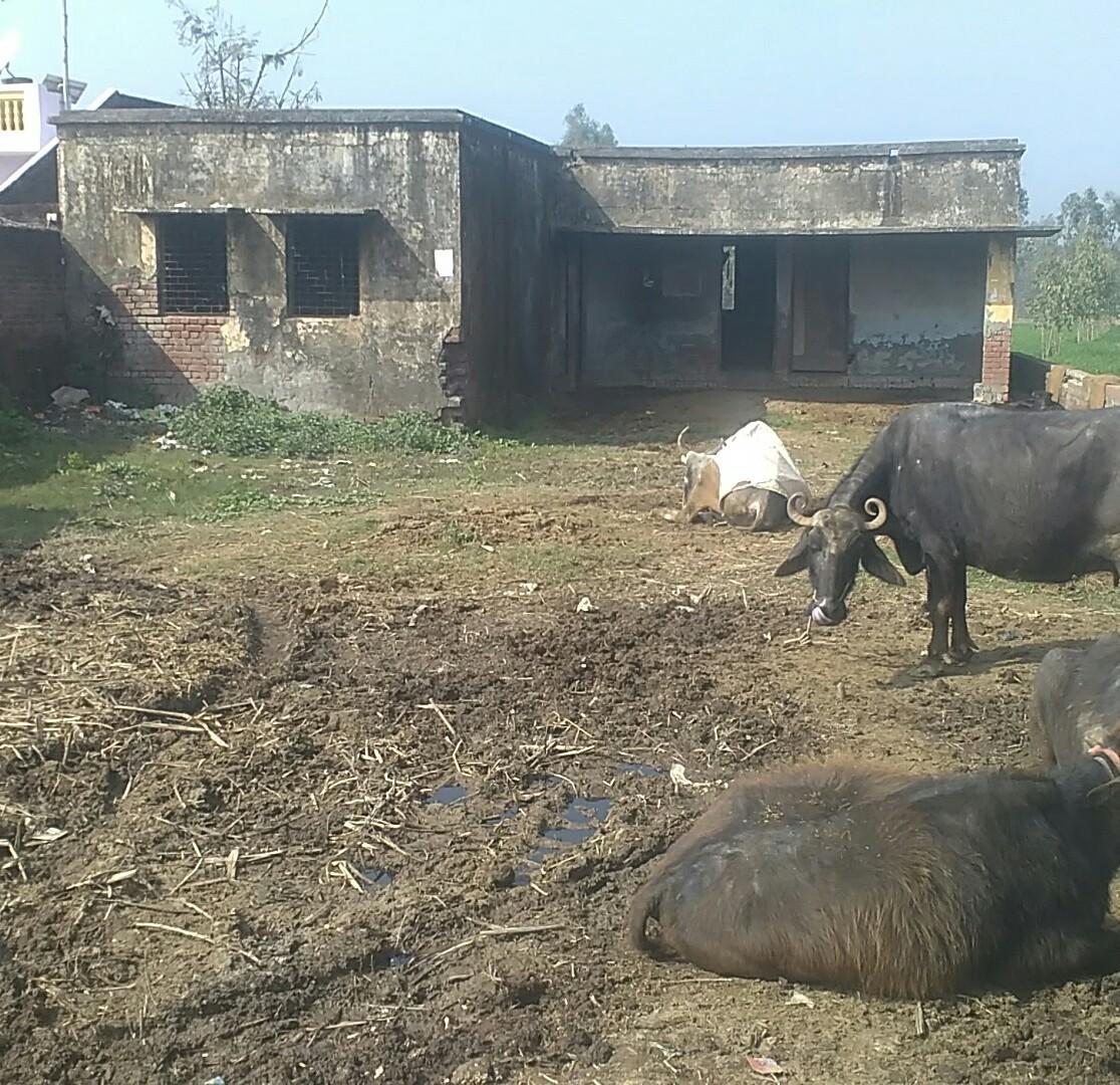 हिंदी समाचार |डीएम साहब यह है आपके जिले के...