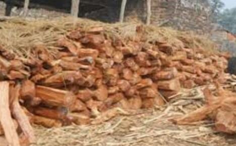हिंदी समाचार | वन विभाग की काटी गई लकड़ियां...